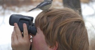 پرنده نگری در ایران