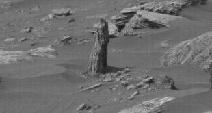 درختی که در مریخ رشد کرد