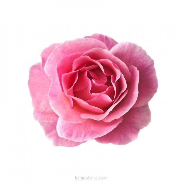 خواص درمانی گل محمدی