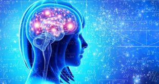 افزایش بهرهوری مغز